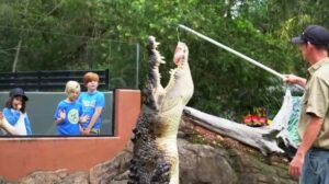 Monster Croc Called Shrek Devours Raw Meat On A Rope