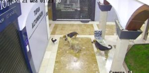 Read more about the article Brave Mother Cat Saves Kitten From A Pack Of Dogs
