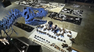 German Palaeontologists Build Giant 60 Million Year Old T-Rex From Fossils For American Millionaire