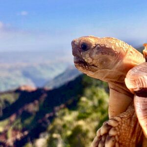 Read more about the article Tortoise Bids For Online Fame To Support Lifestyle When Owner Is No Longer Around