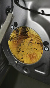 Read more about the article Man Finds Buzzing In His Car Speakers Was Caused By A Colony Of Bees
