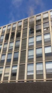 Viral: Citywide Search For Flying Cat That Had Never Been Outside Before It Leapt From Blazing Chicago Building