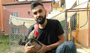 World Tour Of Rooster That Crows Until He Faints Cancelled Because Of Lockdown