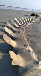 Mystery Of Giant Skeleton That Suddenly Appeared And Disappeared Again On Beach