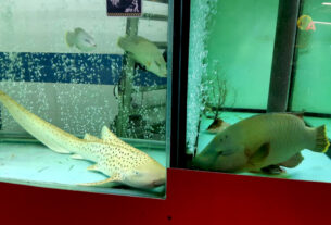 Brit Marine Conservationist Shares Snaps Of Endangered Shark In Malaysian Restaurant Tank