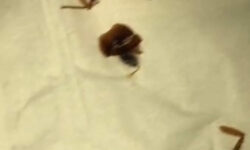Baby Eats Cockroach While Mum Is Busy On Mobile Phone