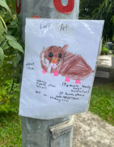 Read more about the article Girl Draws Pet Hamster For Adorable Lost Pet Flyer