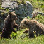 Loneliest Bear Is No Longer Lonely After Getting A Boyfriend