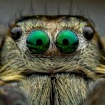 Macro Photographer Gets In The Face Of Scary Spiders And Chilling Creepy-Crawlies