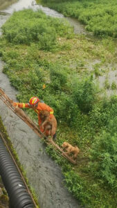 Read more about the article Dogs Rescued After Spending Cold Night On Tiny Island In City River