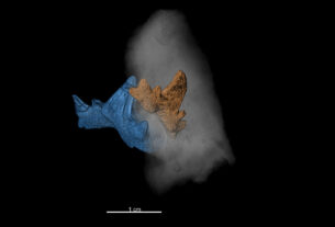 Austrias Oldest Shark Teeth Shed Light On Climate Crisis 325M Years Ago