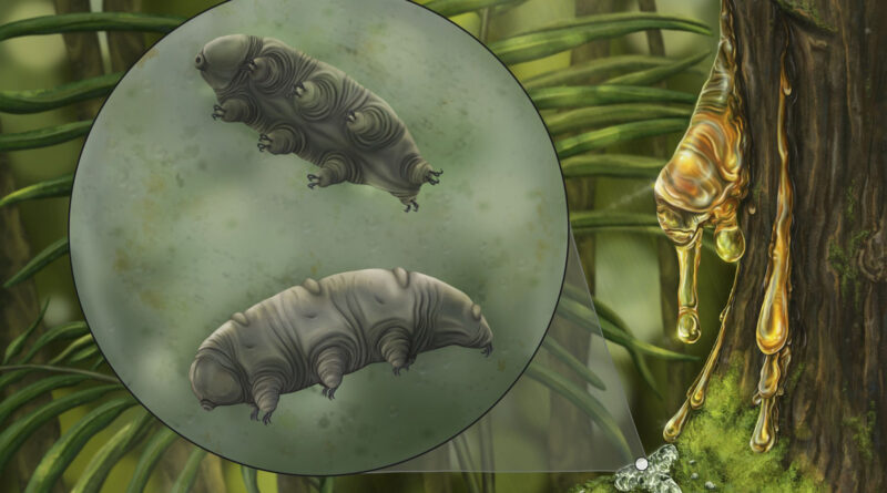 New Species Of Indestructible Water Bear Found Fossilised In 16 Million Year Old Amber